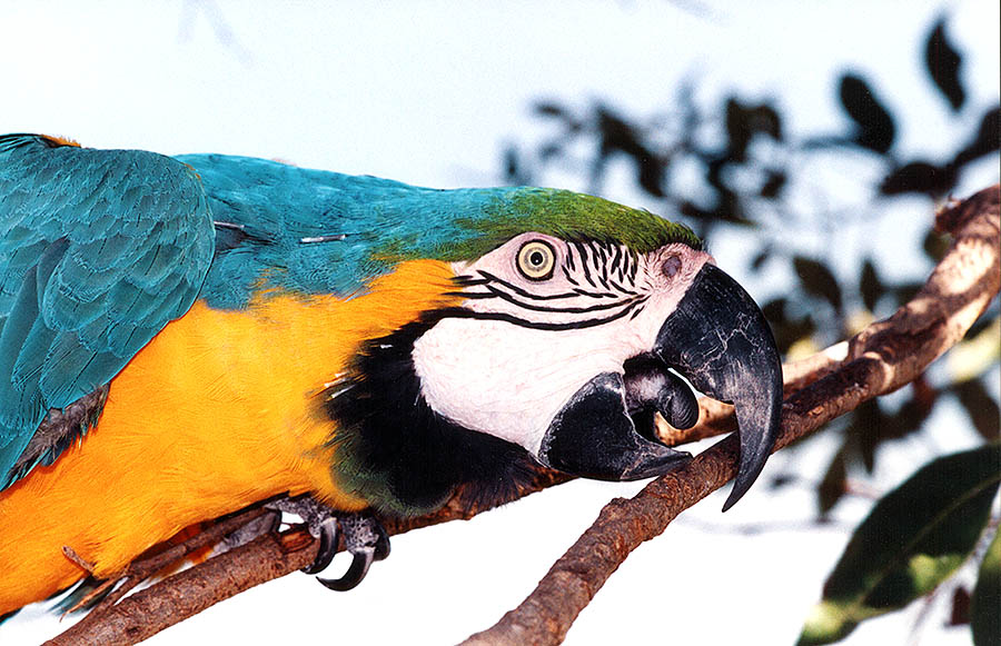 "photo ""Macaw"" tags: ,"
