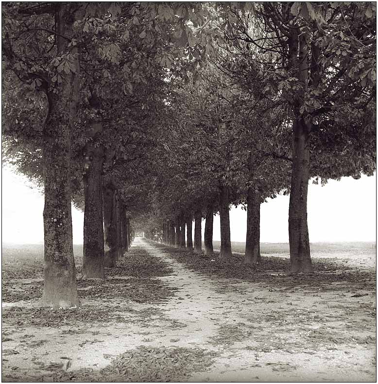"photo ""In the silence of alley"" tags: landscape, black&white, autumn"