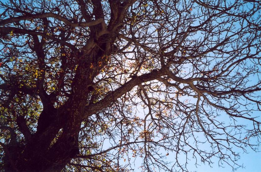 "фото ""геометрия ветвей"" метки: пейзаж,"