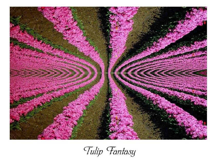 "photo ""Tulip Fantasy"" tags: abstract, nature, flowers"