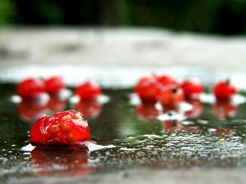 """фото """"autonm berries"""" метки: макро и крупный план,"""