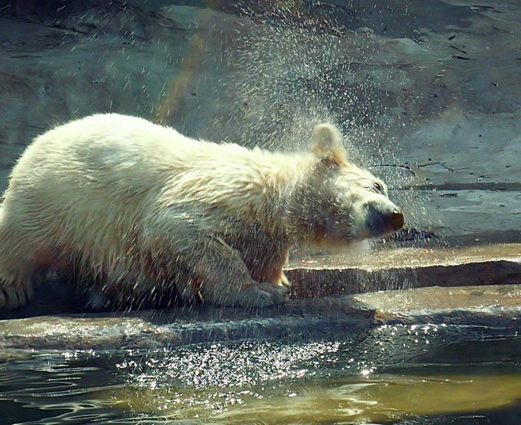 "фото ""Happy Bear"" метки: природа, дикие животные"