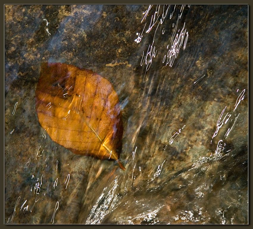 "photo ""Liquid Crystal (2)"" tags: nature,"