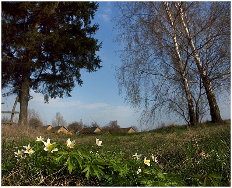 """фото """"Как стать лужайкой?"""" метки: природа, цветы"""