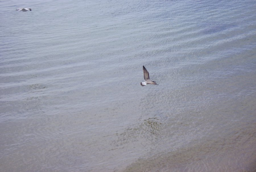 "photo ""Flying over the sea"" tags: landscape, water"