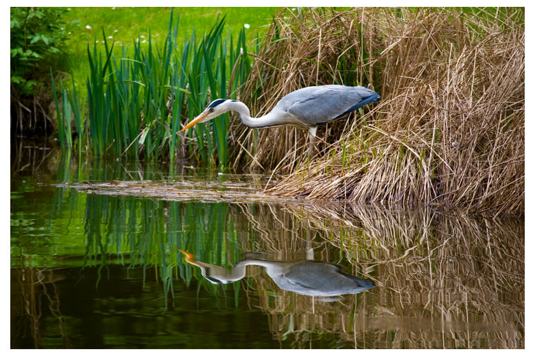 "photo ""Reflections"" tags: nature, landscape, water, wild animals"