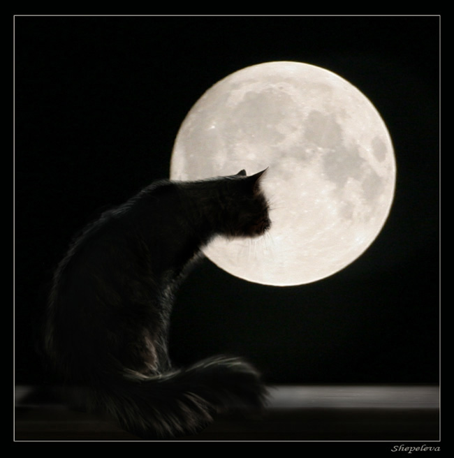 "photo ""Interesting, there are cats on the moon"" tags: montage,"