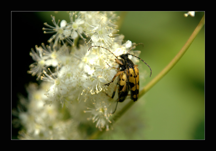 "photo ""A Bugs Life! Let's make luv..."" tags: nature, glamour, insect"
