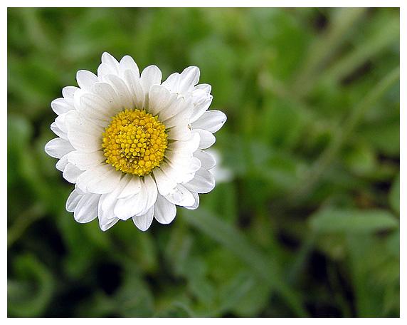 """фото """"Маленькая весна."""" метки: макро и крупный план, природа, цветы"""