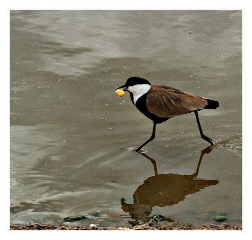 """фото """"Беги-беги-беги"""" метки: природа, дикие животные"""