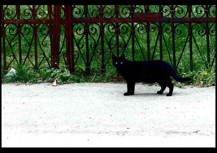 "photo ""dark kitty"" tags: nature, travel, pets/farm animals"