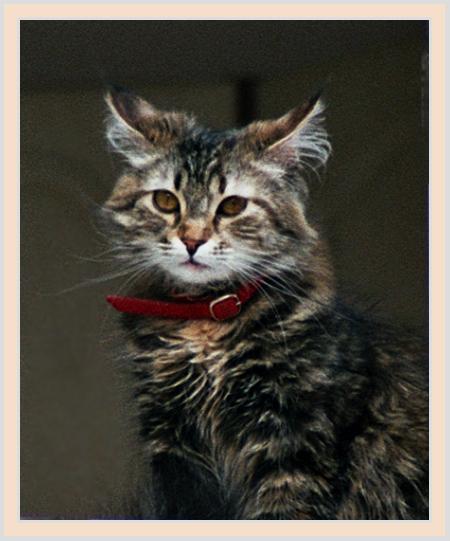 "photo ""Sad and thoughtful"" tags: nature, pets/farm animals"
