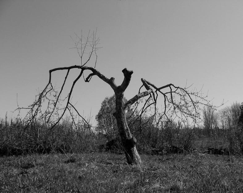 "photo ""Tree"" tags: black&white, landscape,"