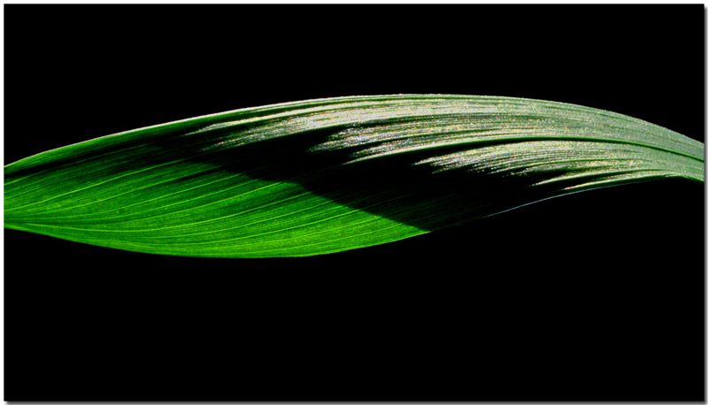 "photo ""Green Wave"" tags: still life, macro and close-up,"
