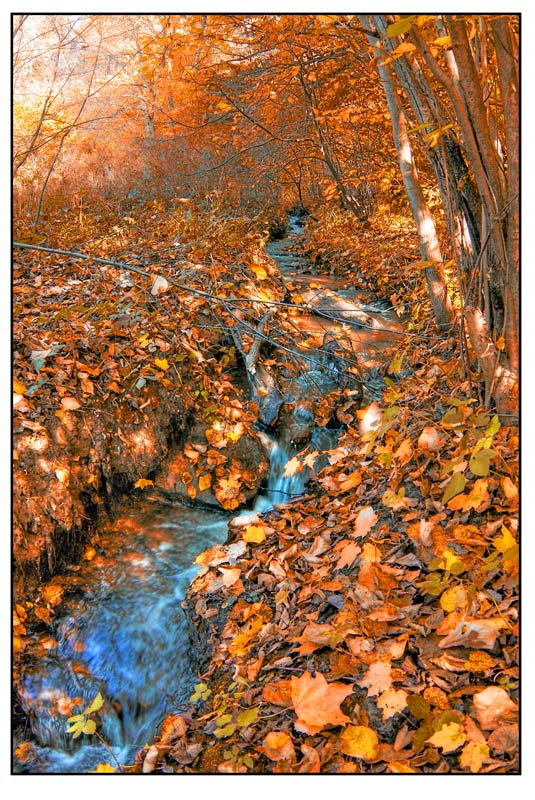 "photo ""Forest stream"" tags: landscape, autumn"
