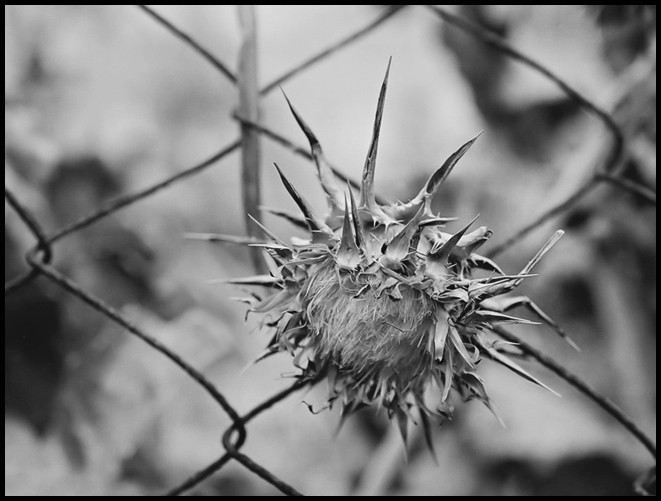 "photo ""Отбывающий пожизненное...  (Prisoner for life)"" tags: misc., black&white,"