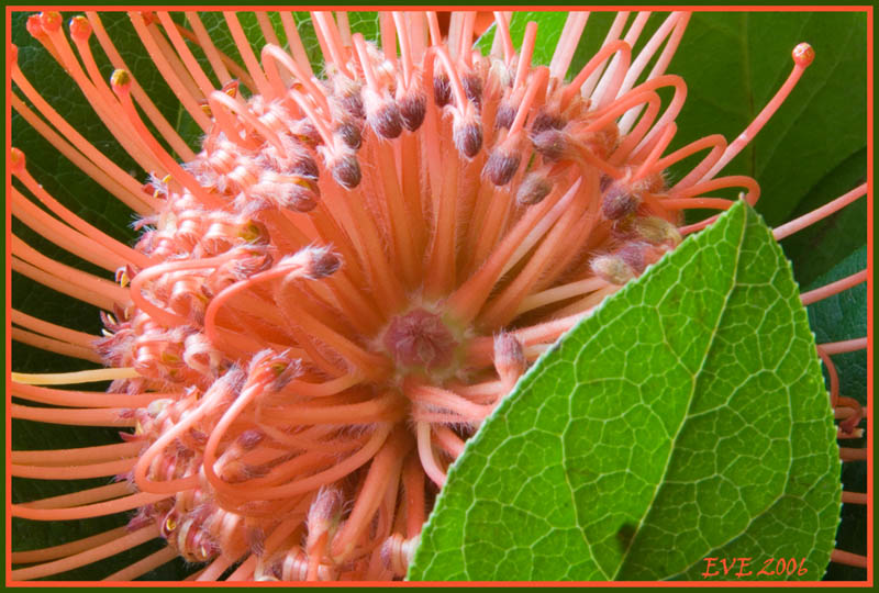 """photo """"Flower"""" tags: macro and close-up, still life,"""