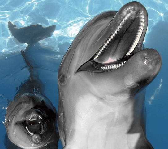 "photo ""dolphins"" tags: nature, pets/farm animals"