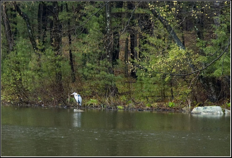 "photo ""Solitude under the rain"" tags: nature, landscape, water, wild animals"
