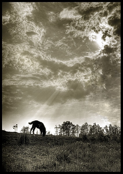 "photo ""Horse"" tags: landscape, nature, clouds, pets/farm animals"