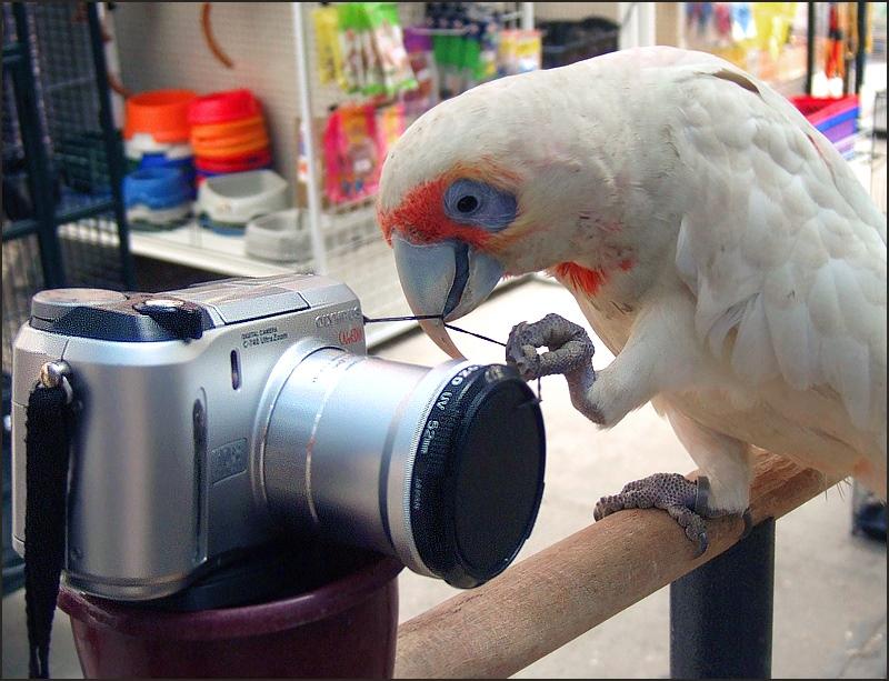 "photo ""Potographer..."" tags: genre, humor,"