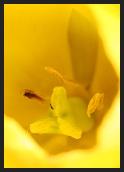 """photo """"yellow"""" tags: macro and close-up,"""