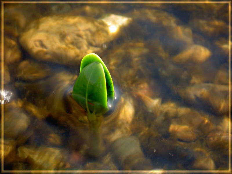 """photo """"***"""" tags: landscape, macro and close-up, water"""