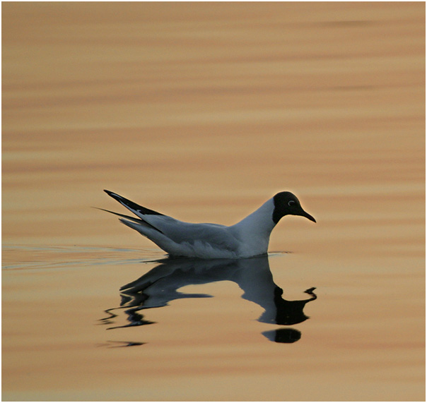 "photo ""Sad seagull"" tags: nature, abstract, wild animals"