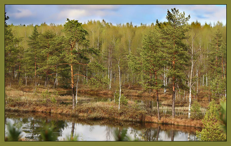 "photo ""Spring wood"" tags: landscape, forest, spring"