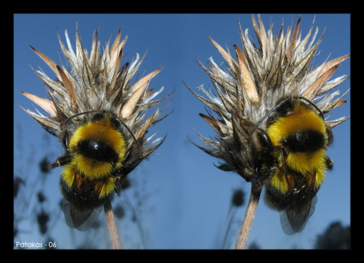 "photo ""Doble Team"" tags: macro and close-up, nature, insect"