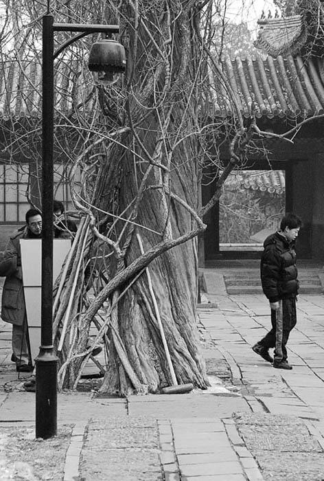"""фото """"Melanholia"""" метки: путешествия, Азия"""