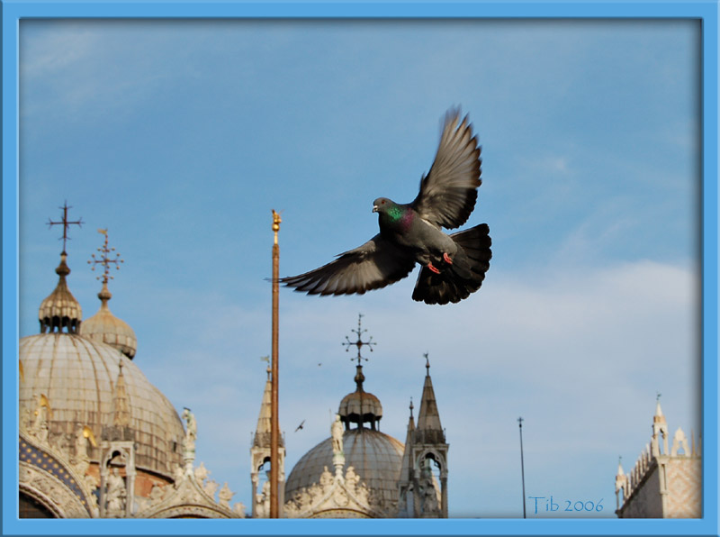 "photo ""Freedom"" tags: travel, still life, Europe"