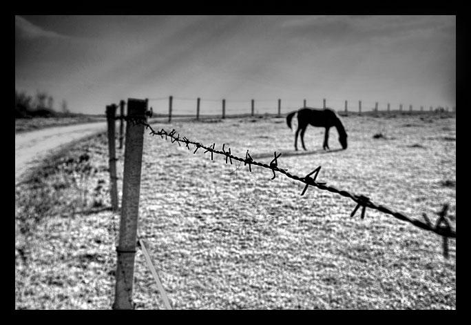 """photo """"***"""" tags: nature, landscape, pets/farm animals"""
