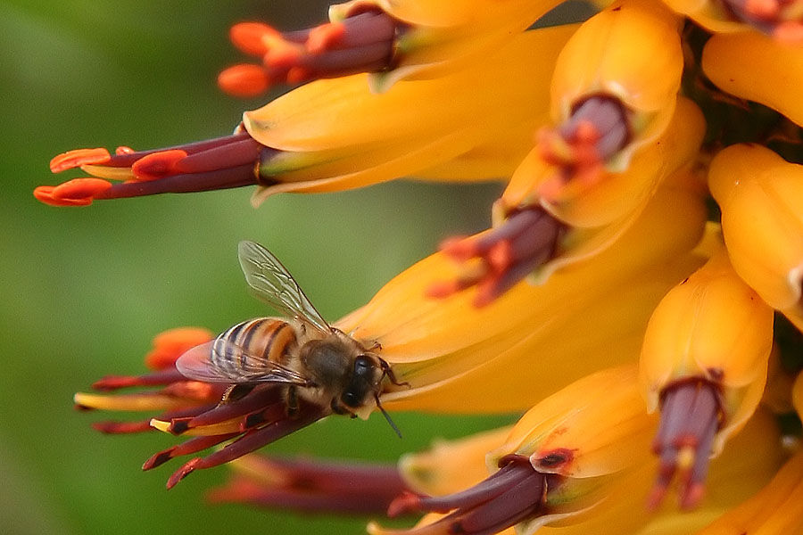 "photo ""Honey work"" tags: nature, macro and close-up, insect"
