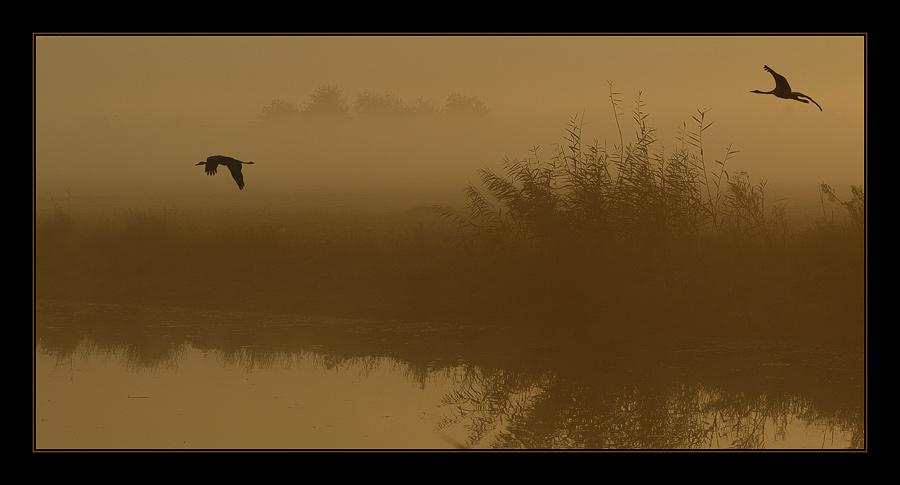 """photo """"***"""" tags: landscape, nature, autumn, wild animals"""
