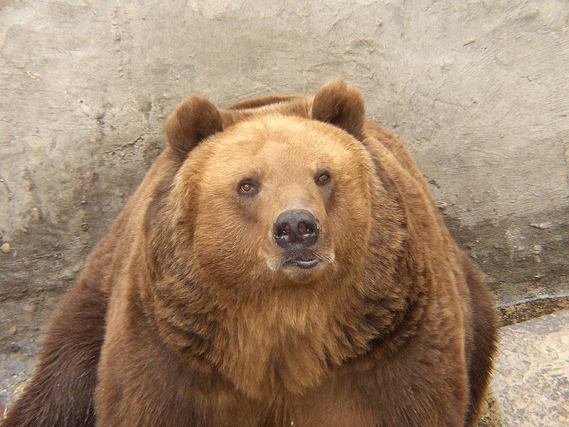 """фото """"Хорошо, что это зоопарк..."""" метки: природа, дикие животные"""