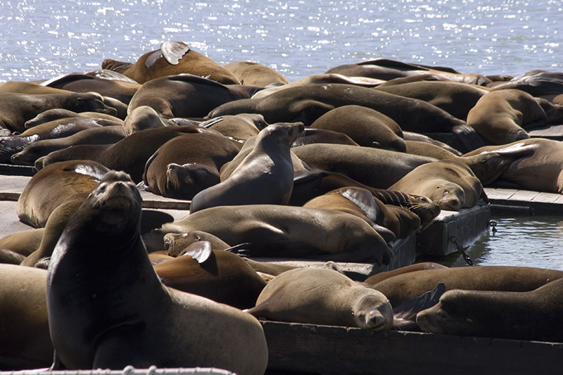 "photo ""seals on wharf"" tags: nature, wild animals"