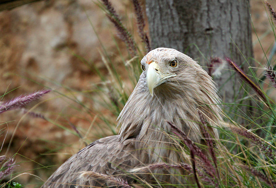 "photo ""Eagle in the grass"" tags: nature, travel, wild animals"