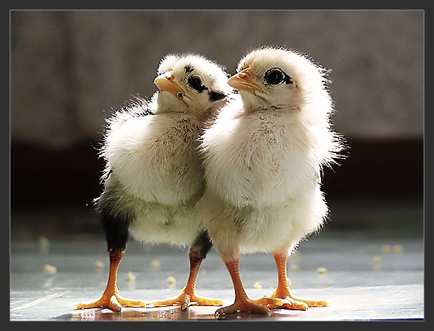 """photo """"Brothers"""" tags: nature, pets/farm animals"""