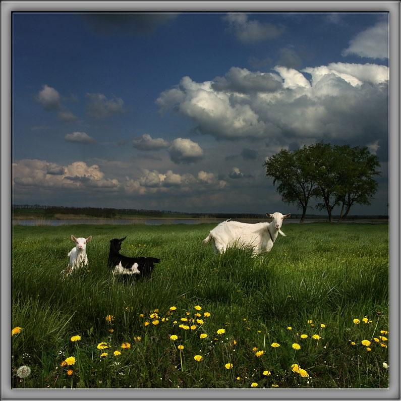 """photo """"***"""" tags: landscape, nature, pets/farm animals"""