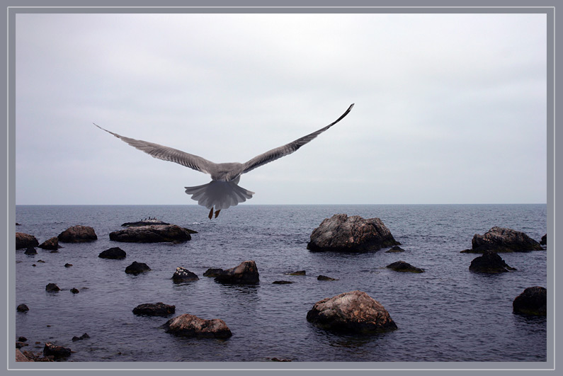 """photo """"Seagull"""" tags: landscape, nature, water"""