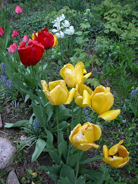 """photo """"my neighbour knows how to garden"""" tags: landscape, nature, flowers, spring"""