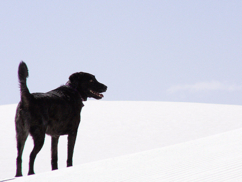 "photo ""Sophia atop Sand Dune"" tags: nature, travel, North America, pets/farm animals"