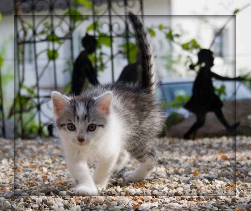 "photo ""Cat"" tags: nature, pets/farm animals"