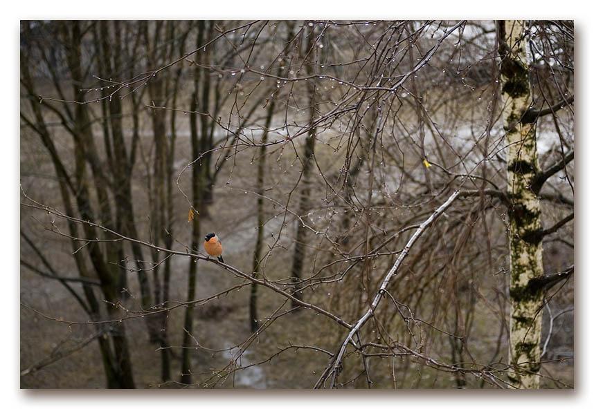 "photo ""April"" tags: landscape, spring"