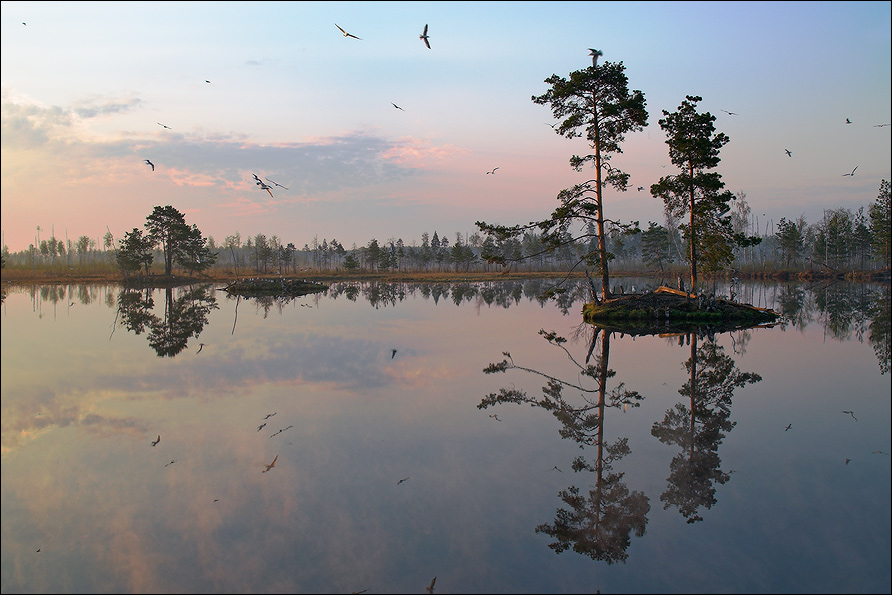 """photo """"Morning picture with islands, pines and seaguls"""" tags: landscape, spring, water"""