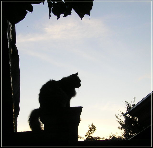 """photo """"Lonely dreamer"""" tags: nature, genre, pets/farm animals"""
