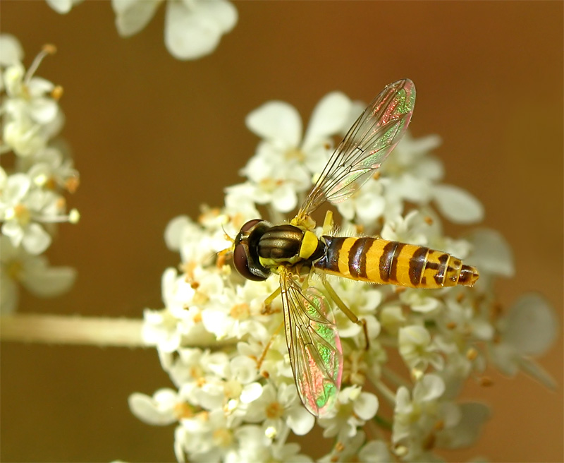 "photo ""***"" tags: macro and close-up, nature, insect"