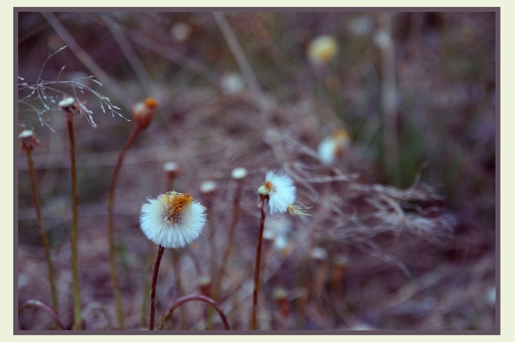 """photo """"windy"""" tags: landscape, nature, flowers, spring"""