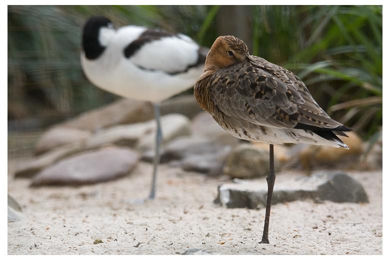 "photo ""Synchronized"" tags: nature, travel, Europe, wild animals"